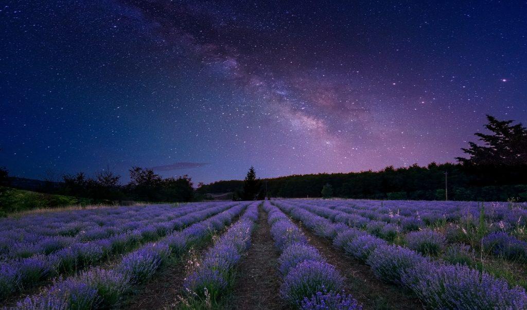 Следвай звездите